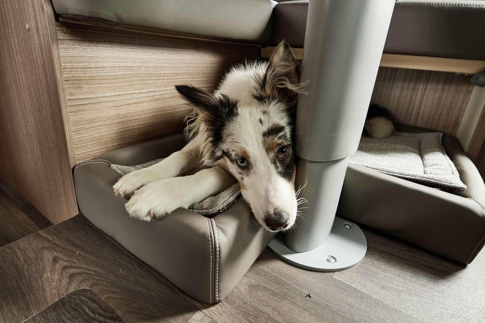Hundebett   Tiere an Bord   Reise & Transport   Carado GmbH