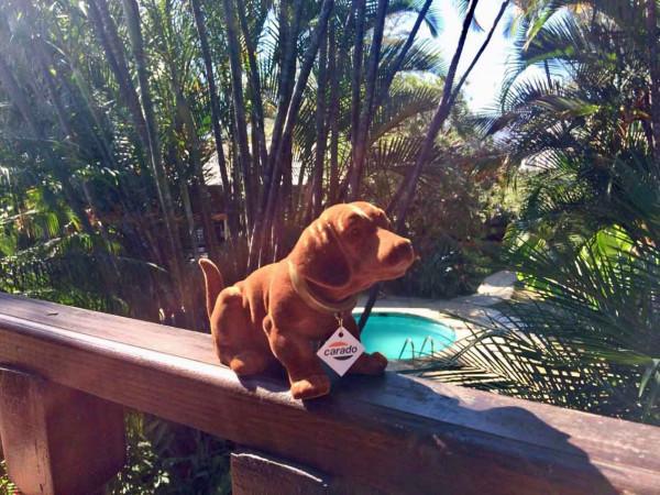 Rudi Bobblehead Dog