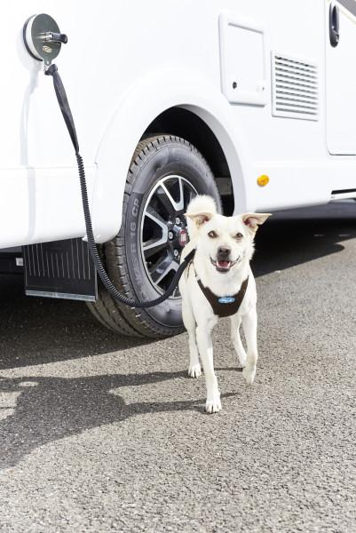 Saughalter Hundeleinenbefestigung